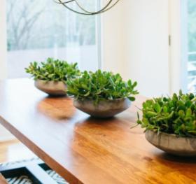 Planters https://shop.magnoliamarket.com/collections/vessels/products/cement-base-bowl